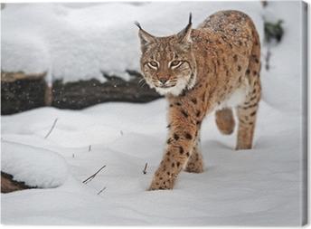 Canvastavla Lynx på vintern