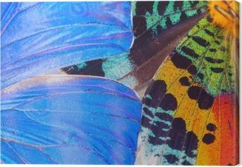 Canvastavla Mångfärgade fjärilar vinge