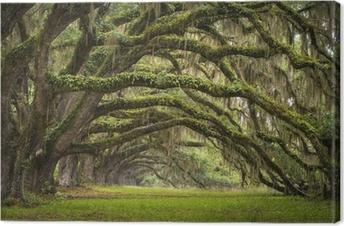 Canvastavla Oaks Avenue Charleston SC plantage Live Oak träd skog