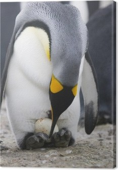 Canvastavla Pingvin med ägg