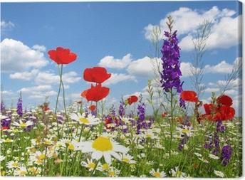Canvastavla Röd vallmo och vilda blommor