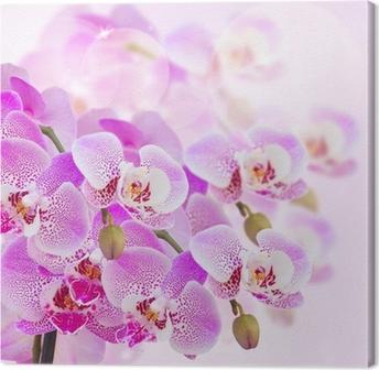 Canvastavla Rosa orkidé gren närbild