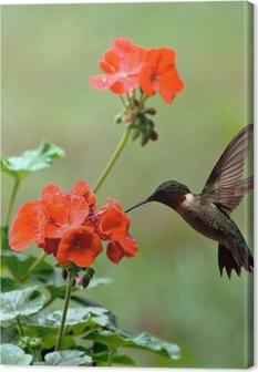 Canvastavla Ruby-throated Hummingbird