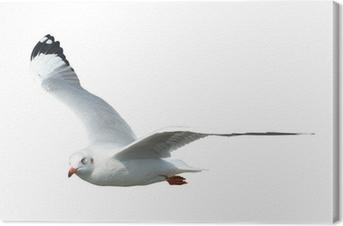 Canvastavla Seagull isolerat på vit