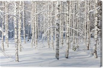 Canvastavla Snöig björkstammar