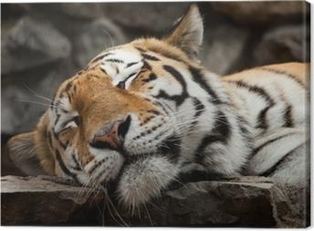 Canvastavla Sovande tiger