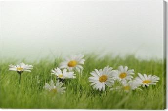 Canvastavla Spring Meadow med tusenskönor