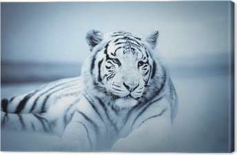 Canvastavla Tiger