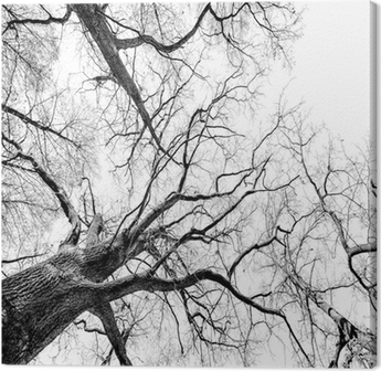 Canvastavla Träd