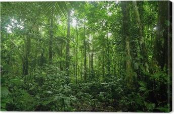 Canvastavla Tropisk regnskog Landskap, Amazon