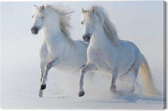 Canvastavla Två galopperande snövita hästar