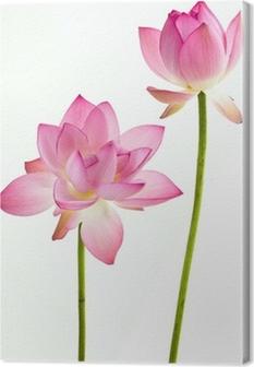 Canvastavla Twain rosa näckros blomma (Lotus) och vit bakgrund.