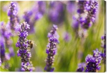 Canvastavla Vackra lavendelfält i Provence, Frankrike i juli