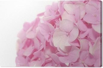 Canvastavla Vackra rosa Hydrangea blommor på vit bakgrund