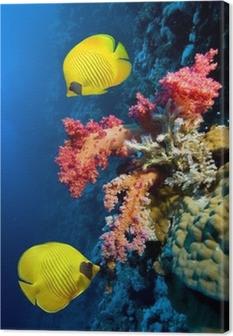 Canvastavla Vattensbild av korallrev och Maskerad fjärilsfisk