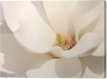 Canvastavla Vita magnolia blommor