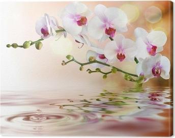 Canvastavla Vita orkidéer på vatten med droppe