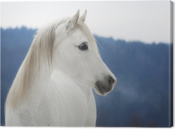 Canvastavla Weiße Vollblut Araber Stute im Schnee