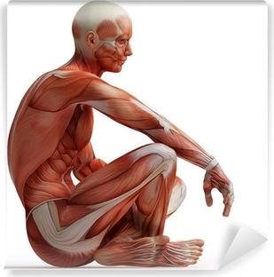 Carta da Parati in Vinile Anatomia, muscoli