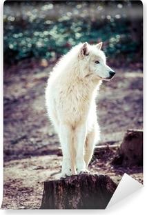 Carta da Parati in Vinile Artico lupo bianco