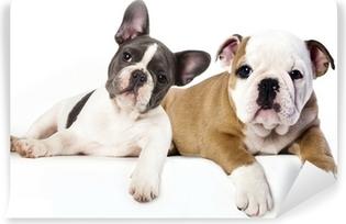Carta da Parati Autoadesiva Bulldog francese e inglese bulldog cucciolo