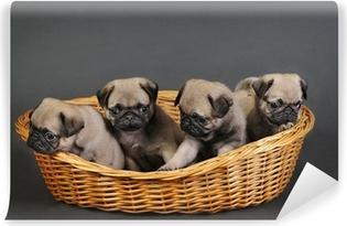 Carta da Parati Autoadesiva Quattro cuccioli del pug.