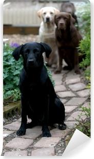 Carta da Parati Autoadesiva Quattro Labrador