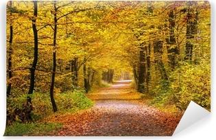 Carta da Parati in Vinile Autunno foresta