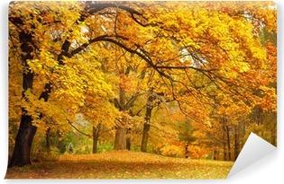 Carta da Parati in Vinile Autunno / Gold alberi in un parco
