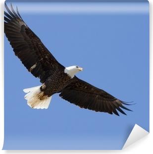 Carta da Parati in Vinile Bald Eagle