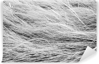 Carta da Parati in Vinile Bianco e nero foto, close up erba campo tessitura backgrou