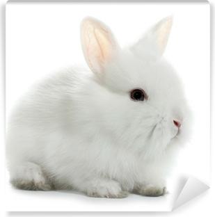 Carta da Parati in Vinile Coniglietto bambino isolato su sfondo bianco