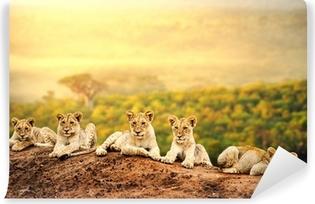 Carta da Parati in Vinile Cuccioli di leone in attesa insieme.
