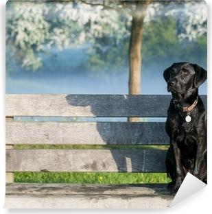 Carta da Parati in Vinile Cucciolo labrador sulla panchina
