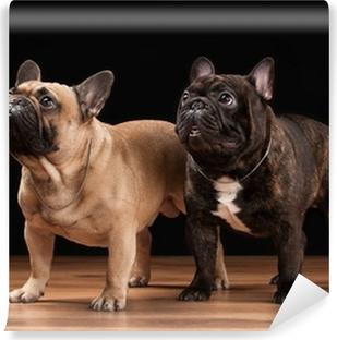 Quadro Su Tela Due Cuccioli Di Bulldog Francese Su Sfondo Nero Con
