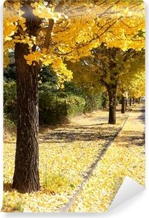 Carta da Parati in Vinile Fila di alberi con le foglie gialle ginkgo