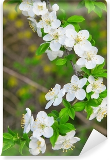 Fiori Bianchi Primavera.Carta Da Parati Piccolo Albero Di Mele In Fiore Pixers