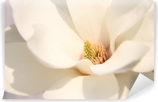 Carta da Parati in Vinile Fiori bianco magnolia
