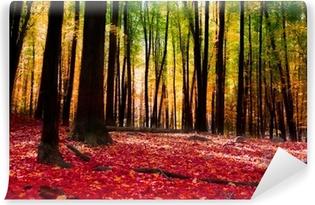Carta da Parati in Vinile Foresta in autunno con luce dorata