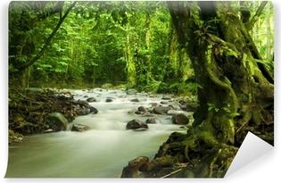 Carta Da Parati Foresta Tropicale : Carte da parati foresta pluviale u2022 pixers® viviamo per il cambiamento