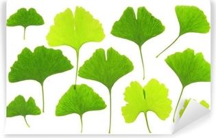 Carta da Parati in Vinile Ginkgo - diverse forme di foglie