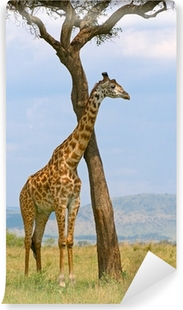 Carta da Parati in Vinile Giraffa e un albero, Masai Mara, Kenya