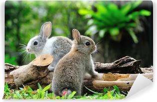 Carta da Parati Lavabile Due conigli in giardino
