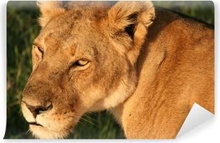 Carta da Parati in Vinile Lion Masai Mara in Kenya