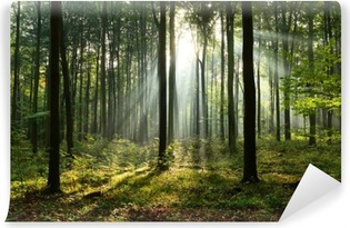 Carta da Parati in Vinile Mattina nella foresta