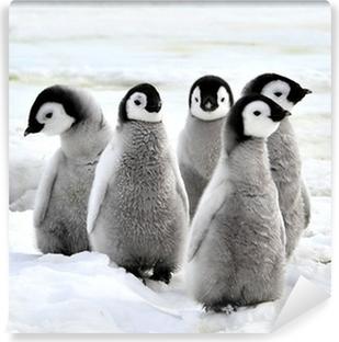 Carta da Parati in Vinile Pinguino imperatore