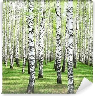 Carta da Parati in Vinile Primi verdi di primavera in boschetto di betulle