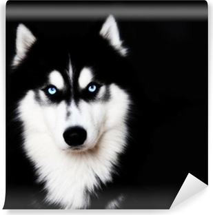 Carte da parati cani pixers viviamo per il cambiamento - Cane occhi azzurri ...