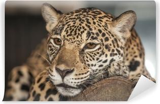 Carta da Parati in Vinile Ritratto di leopardo