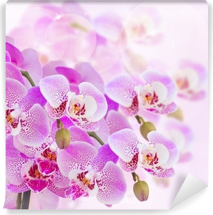 Carta da Parati in Vinile Rosa ramo di orchidea da vicino